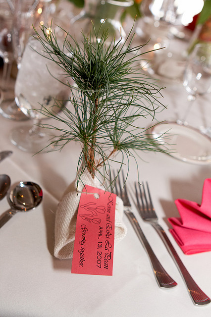 Wedding Favors That Grow Tree Seedlings Cheryl Barker