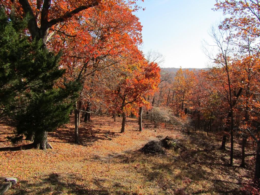 Fall 2011 255
