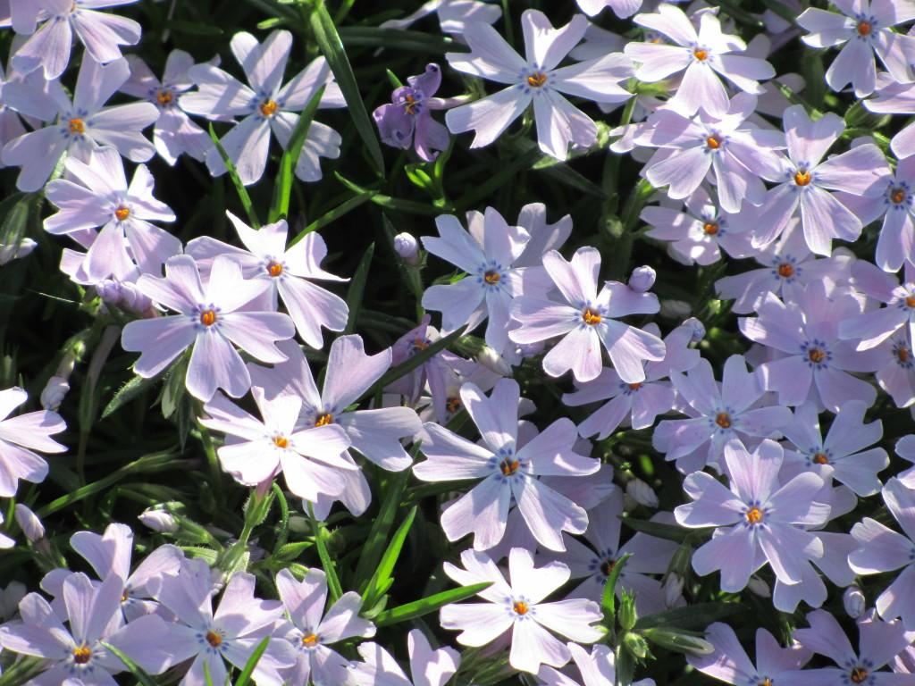 Spring 2012 009