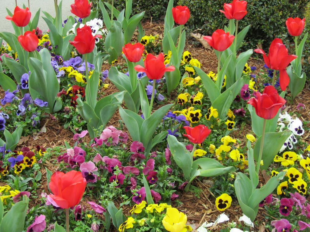 Spring 2012 029